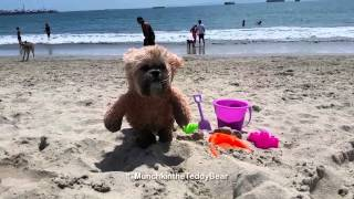 Munchkin The Teddy Bear Goes to the Beach