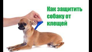 Как Защитить Собаку От Клещей & Капли, Таблетки, Вакцины, Ошейник. Ветклиника Био-Вет