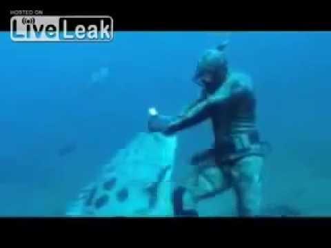 Рыба украла добычу у подводного охотника.