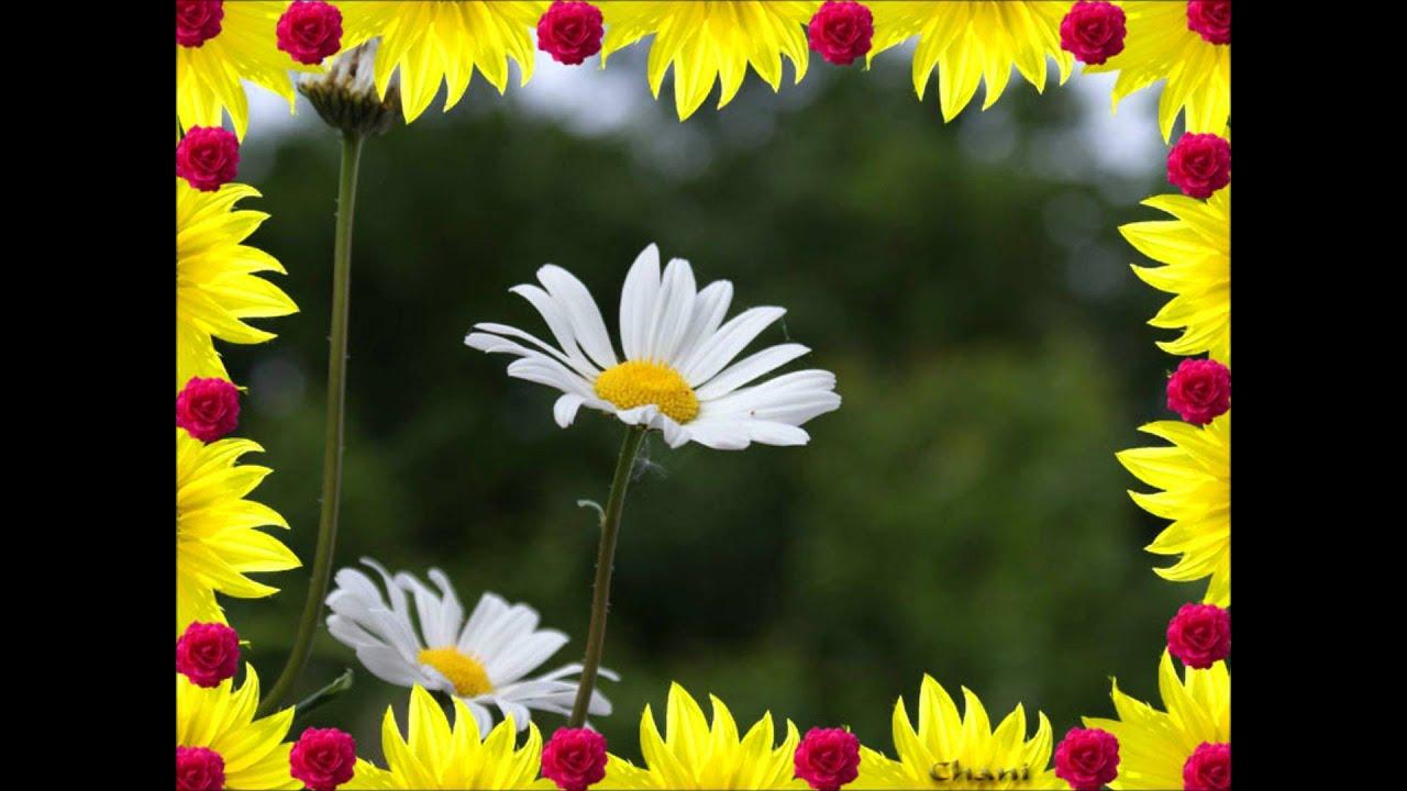 Le pouvoir des fleurs Laurent Voulzy - YouTube