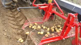 Vađenje krompira u lijehama