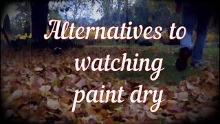 Alternative to watching paint dry (Stiga Leaf blower)