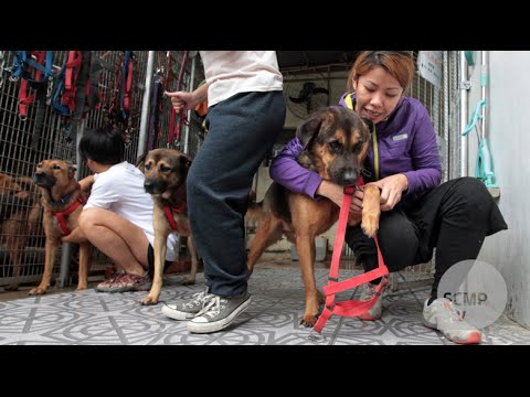 Hong Kong dog shelter overcomes dark past by continuing animal welfare cause