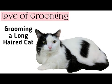 How To Groom a Long Haired Cat from Bathing to Drying and the Final Comb Out