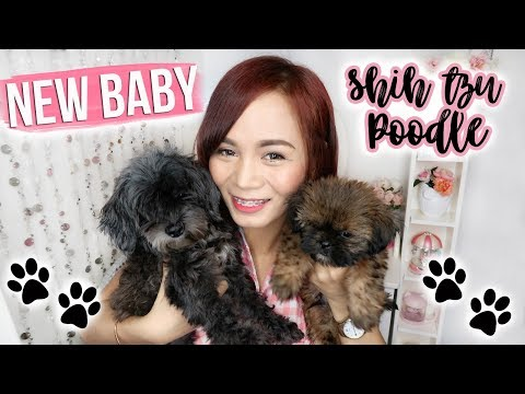 Vlog : MEET MY NEW BABY!!