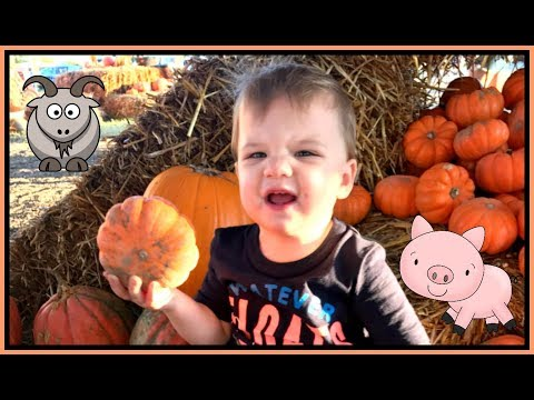Family Fun WITH KIDS at Halloween Pumpkin Patch Corn Maze Children Petting Zoo Farm Animals