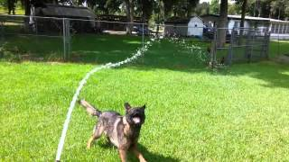 Dog Boarding Brooksville Fl | Call Us: 352-848-0422 | New Sentry K9 | Dog Boarding Spring Hill Fl |