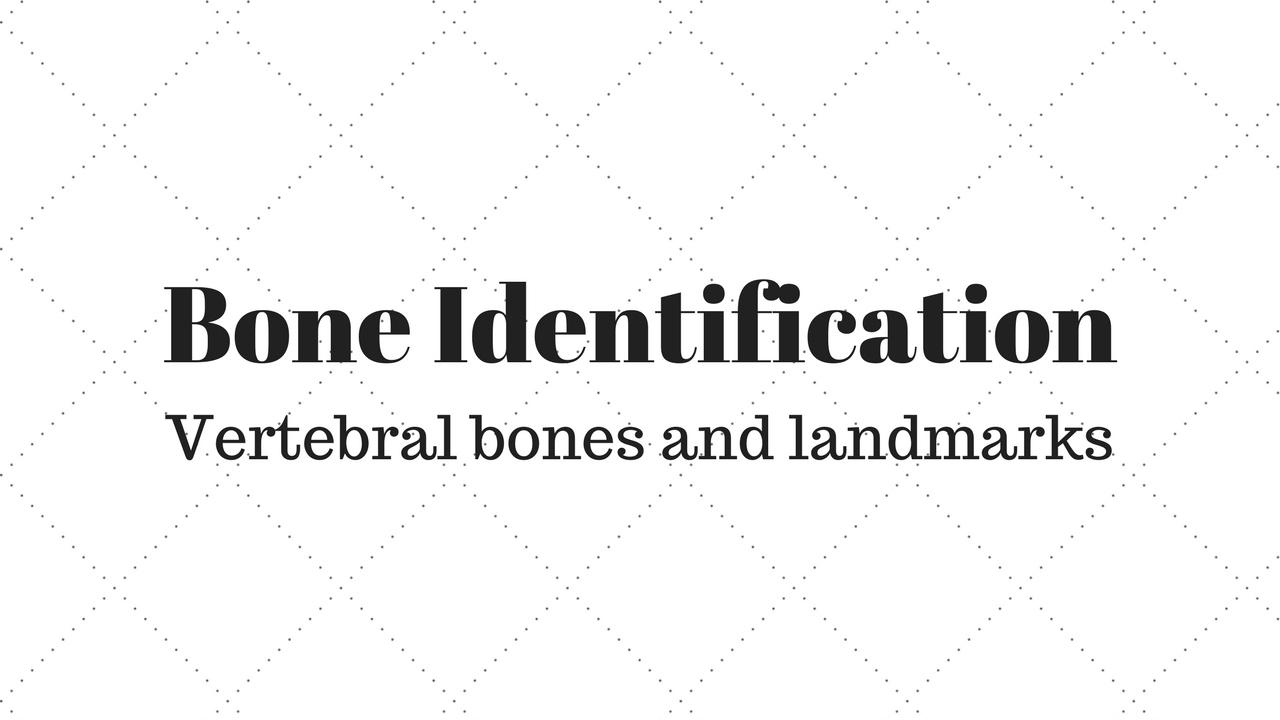 Vertebral Bones And Structures Youtube