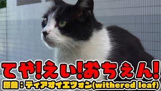 【東方PV?】てや!えい!おちぇん!【猫/ビートまりお】