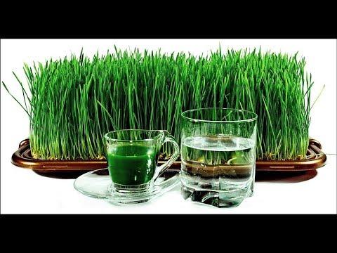 Презентация продукта ВИТГРАС   Solar Energi   сухой сок ростков пшеницы