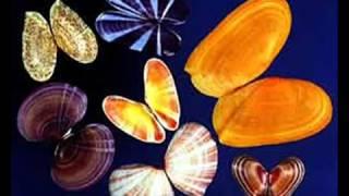 Моллюски 7 класс