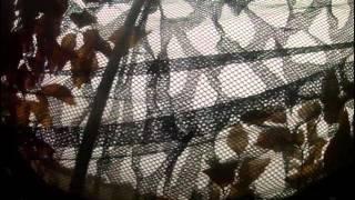 Kragejagt 2016-03-20 / Crow Shooting