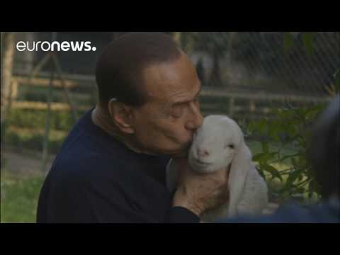 Berlusconi joins vegetarian campaign & adopts five lambs 1