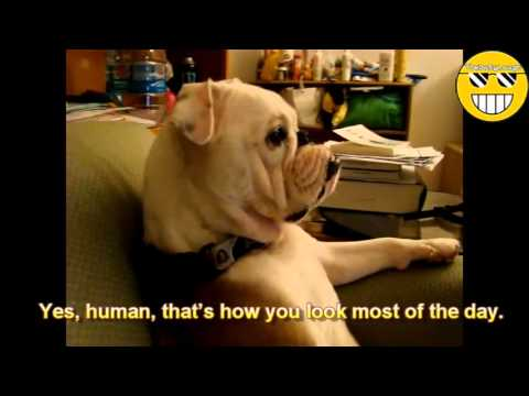 Hilarious Animals: Pets Making Fun of Their Owners