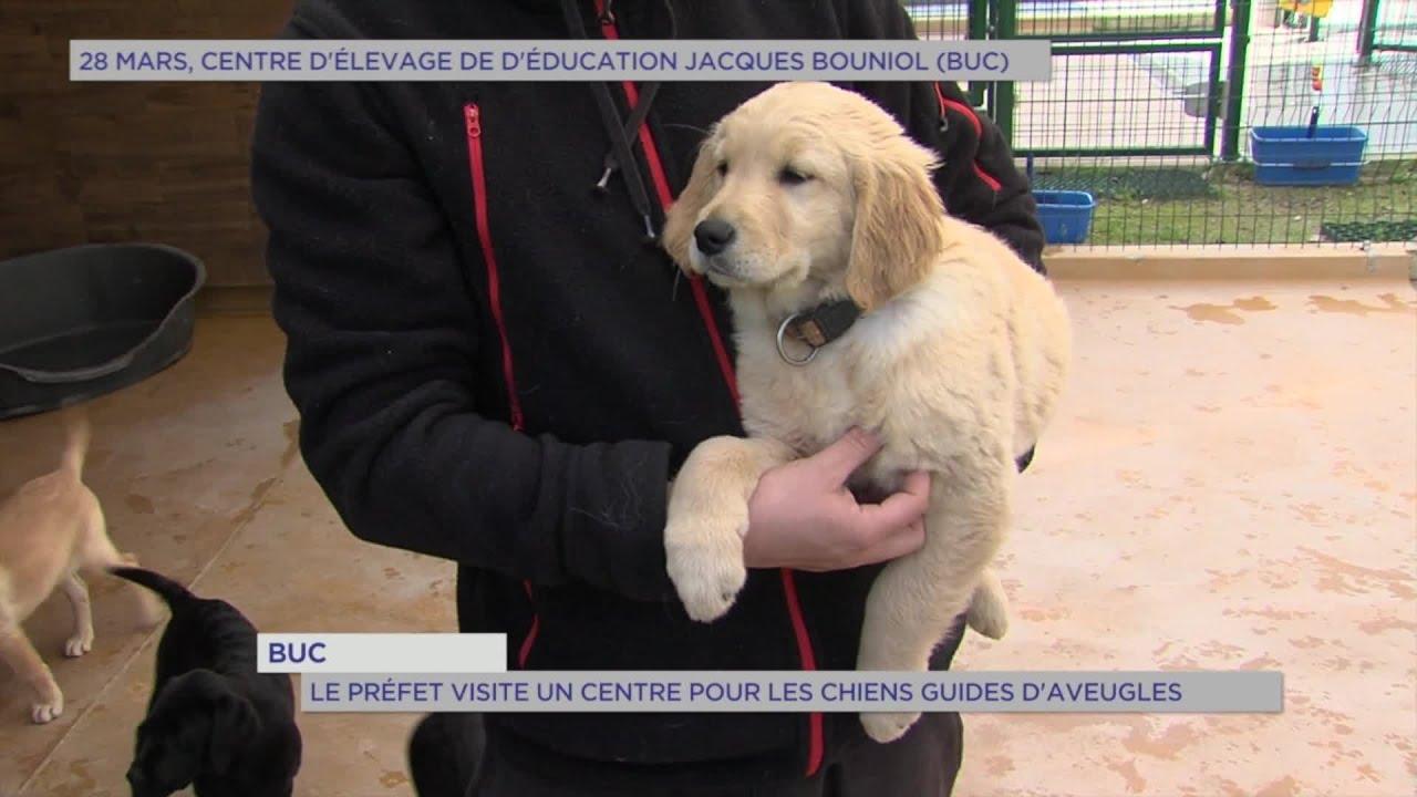 Yvelines | Buc : Le Préfet visite un centre pour les chiens guides d'aveugles