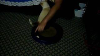 honkey cat