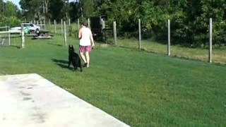 Obedience Training,advanced Off Leash Training