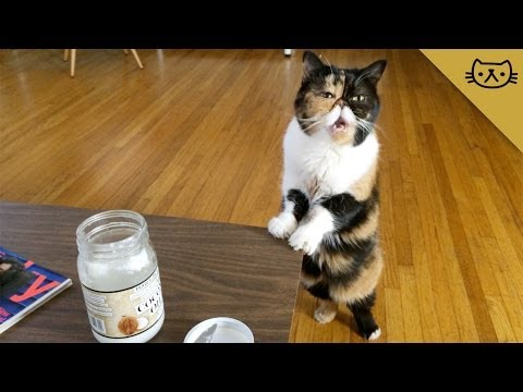 Cat Goes Crazy for Coconut Oil