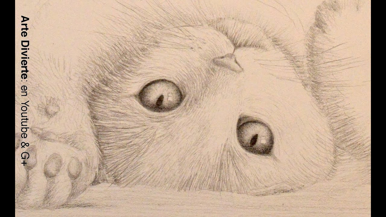 Bocetos de animales Cmo dibujar un gato  Arte Divierte  YouTube