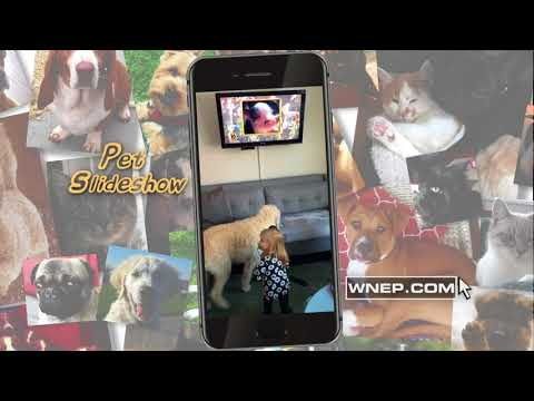 Pet Slideshow POP 30
