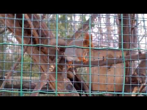 Odessa Zoo 2014.02.15 12 44 28