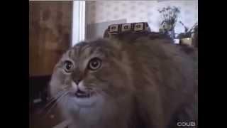 Эпическое Спасение кота Барсика в Нижнем Новгороде