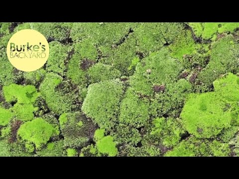 Collecting & Using Moss