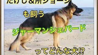 ペットで犬を飼おうと迷っている方へ〜ジャーマンシェパードドック〜 世...