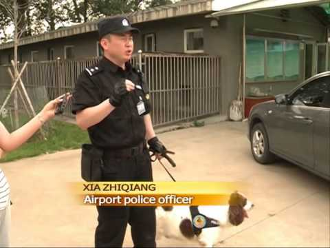 Meeting Beijing Airport's Police Canine Unit