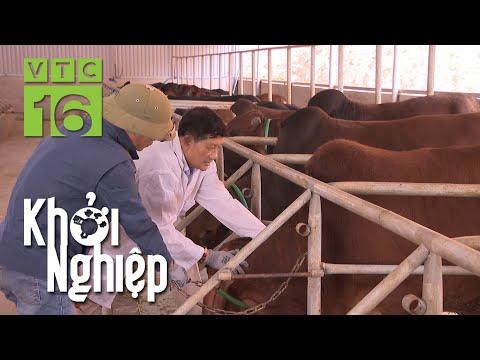 Trại bò đổ bệnh, nông hộ lo lắng | Khởi nghiệp 744 | VTC16