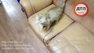 24.04.2017 ФЕЛИКС УТРО КЛИНИКА ПРОГУЛКА 777
