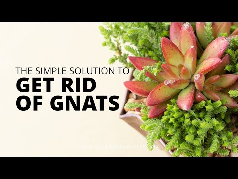 How to get rid of mealy bugs on succulents | Succulents and Sunshine