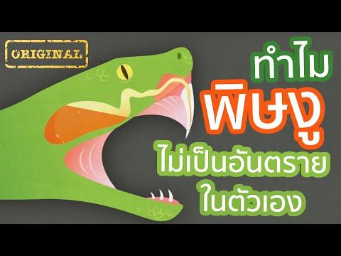 ทำไม พิษงู ไม่เป็นอันตรายในตัวเอง   รู้หรือไม่ - DYK - วันที่ 04 Jul 2019