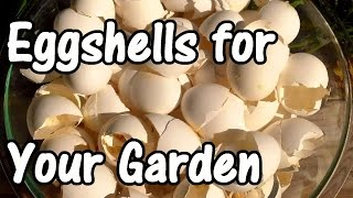 2 Min. Tip: How We Use Eggshells in Our Garden (Eggshell Calcium)