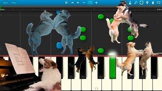 Собачий Вальс (на пианино Synthesia)(Как играть на пианино Собачий Вальс [Piano Tutorial] Synthesia $$ Партнерка Youtube от 10 подписчиков (JOIN QUIZGROUP PARTNER PROGRAM):..., 2015-08-22T10:59:34.000Z)
