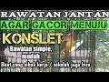 Rawatan Lovebird Jantan Agar Gacor Ke Arah Konslet  Mp3 - Mp4 Download