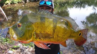 Catching GIANT Peacock Bass and ZOMBIE FISH!!!