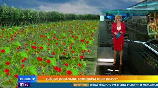 Ученые: помидоры могут кричать от боли и жажды