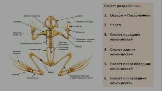 13. Класс Земноводные (экспресс Зоология) подготовка к ОГЭ и ЕГЭ Биология