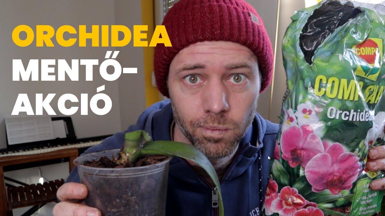 Download Megmenthető egy döglődő orchidea? | #Lackógazda