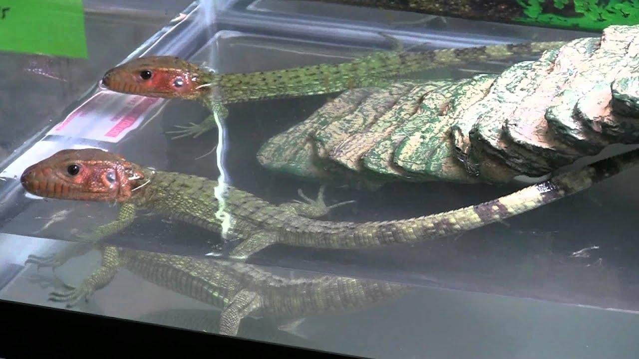Reptile Expo Pomona