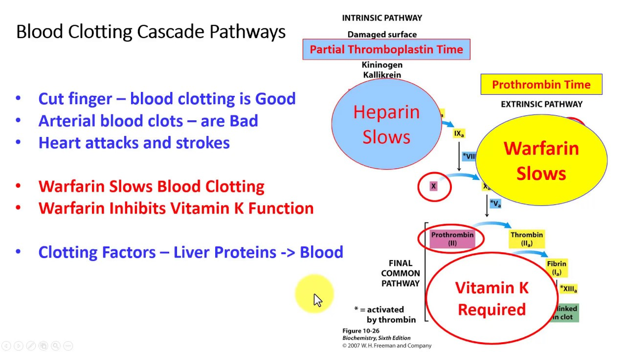 Blood coagulation. Factors, blood clotting time 50