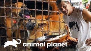 restaurante-vende-perro-asado-wild-frank-al-rescate-animal-planet