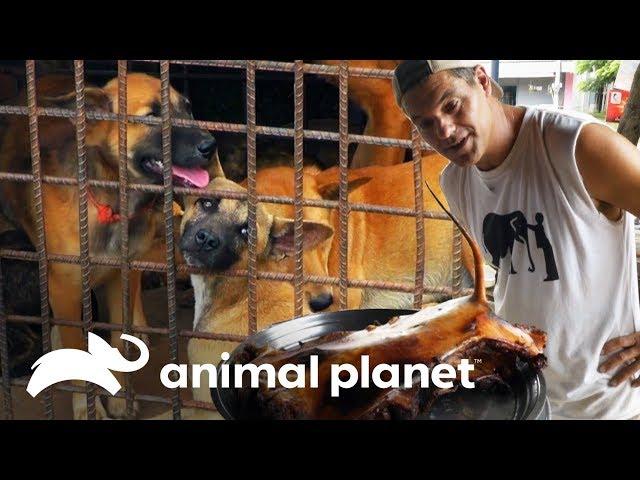 Restaurante vende perro asado | Wild Frank: Al rescate | Animal Planet