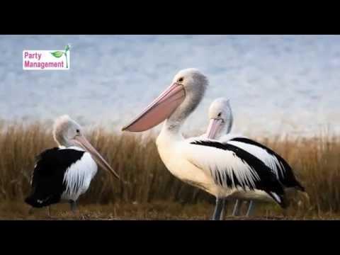 Video presentation of Bulgaria - nature, phenomenons, history