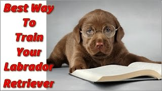 √ √ √  How To Train A Labrador Retriever Puppy ♥ Start Now ♥ How To Train Labrador Retrievers ☼ ☼ ☼