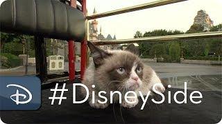 Grumpy_Cat_Finds_Her_Disney_Side_ _Grumpy_&_Grumpy_Cat_ _Disney_Parks