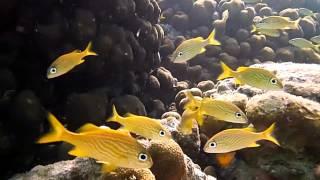 Panasonic LUMIX TS25 waterproof camera coral reef demo video - with ALZO Snorkel-pod