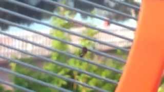 Electrisk og Sprengfarelig Flue