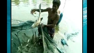 Village Net Fishing | underwater giant fish catching by Net